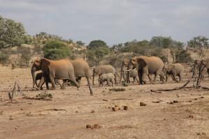 elefanter 1080